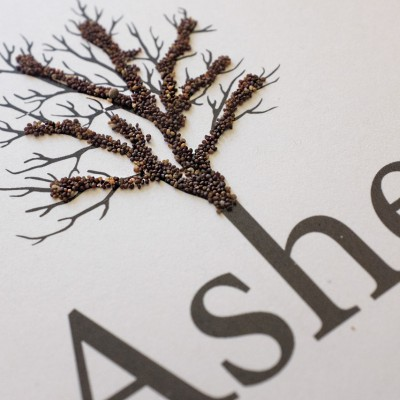 EP »Ashes« Digifile Bookletcard Seeds